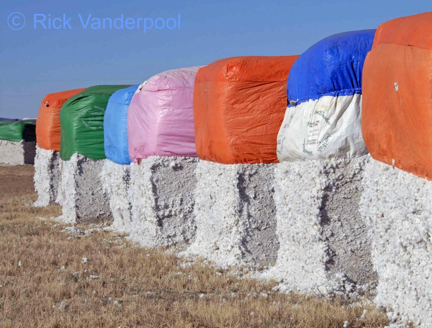 Cotton modules lined up in the field