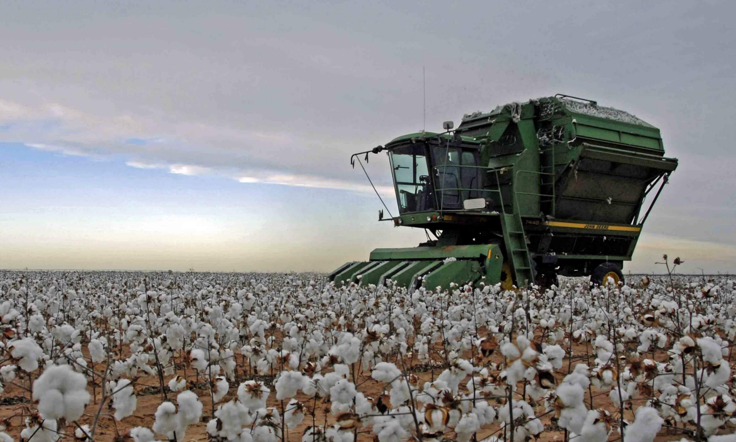 Cotton picking machine in a Lubbock, Texas field
